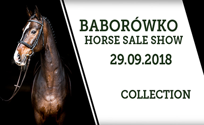 Baborowko Horse Sale German Eventing
